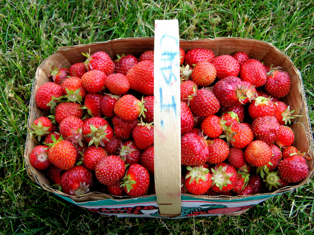 The goodness of summer: fresh-picked strawberries at a farm Photo credit: Andrea_44 (Flickr)