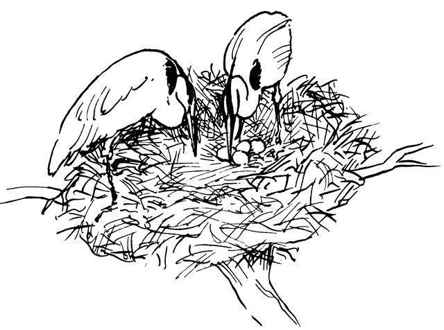 1. In April and May, herons lay eggs.