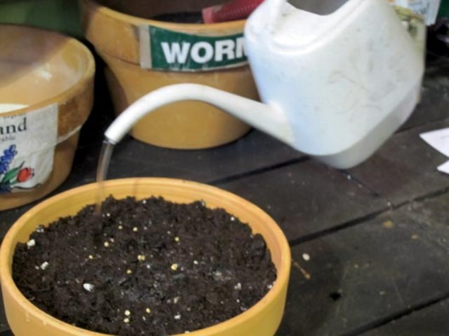 4.Pour a little water onto the soil.