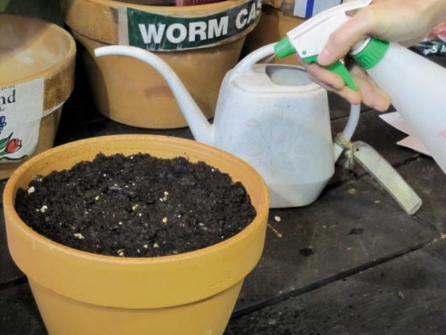 5.Keep the soil moist, not wet. Seeds can die from too much water.