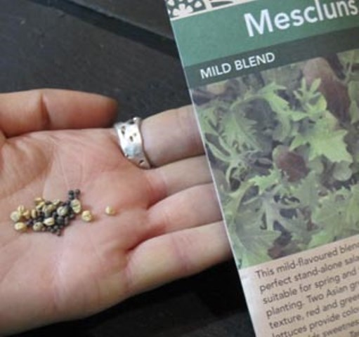 A packet of seeds.