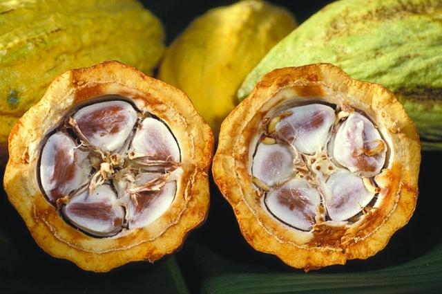 Cacao beans Photo: Public domain