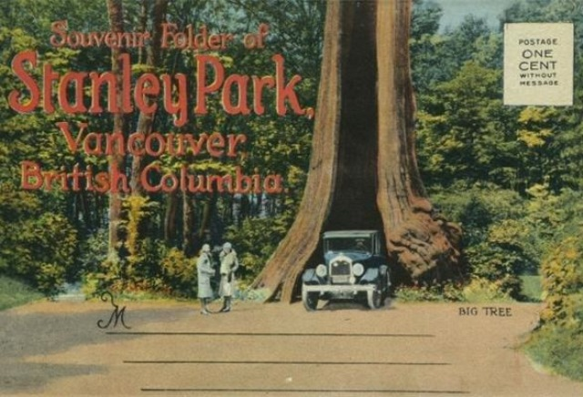 This old postcard shows the Hollow Tree. Photo: The Vancouver Sun from the collection of John Mackie
