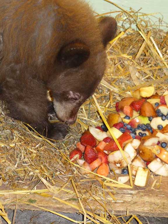 Tinsel got a good meal. PHOTO-COURTESY OF NORTHERN LIGHTS WILDLIFE SHELTER
