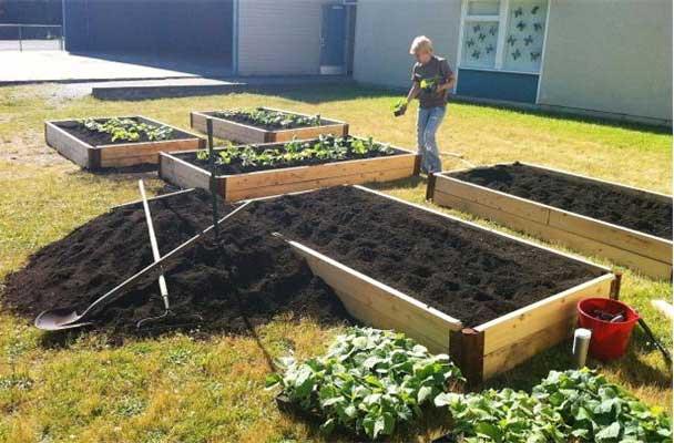 Raised planting beds at a Delta schoolyard. Photo: Mike Schneider