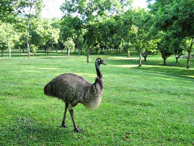 walking-emu3w
