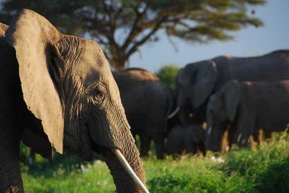 intelligence-of-elephants