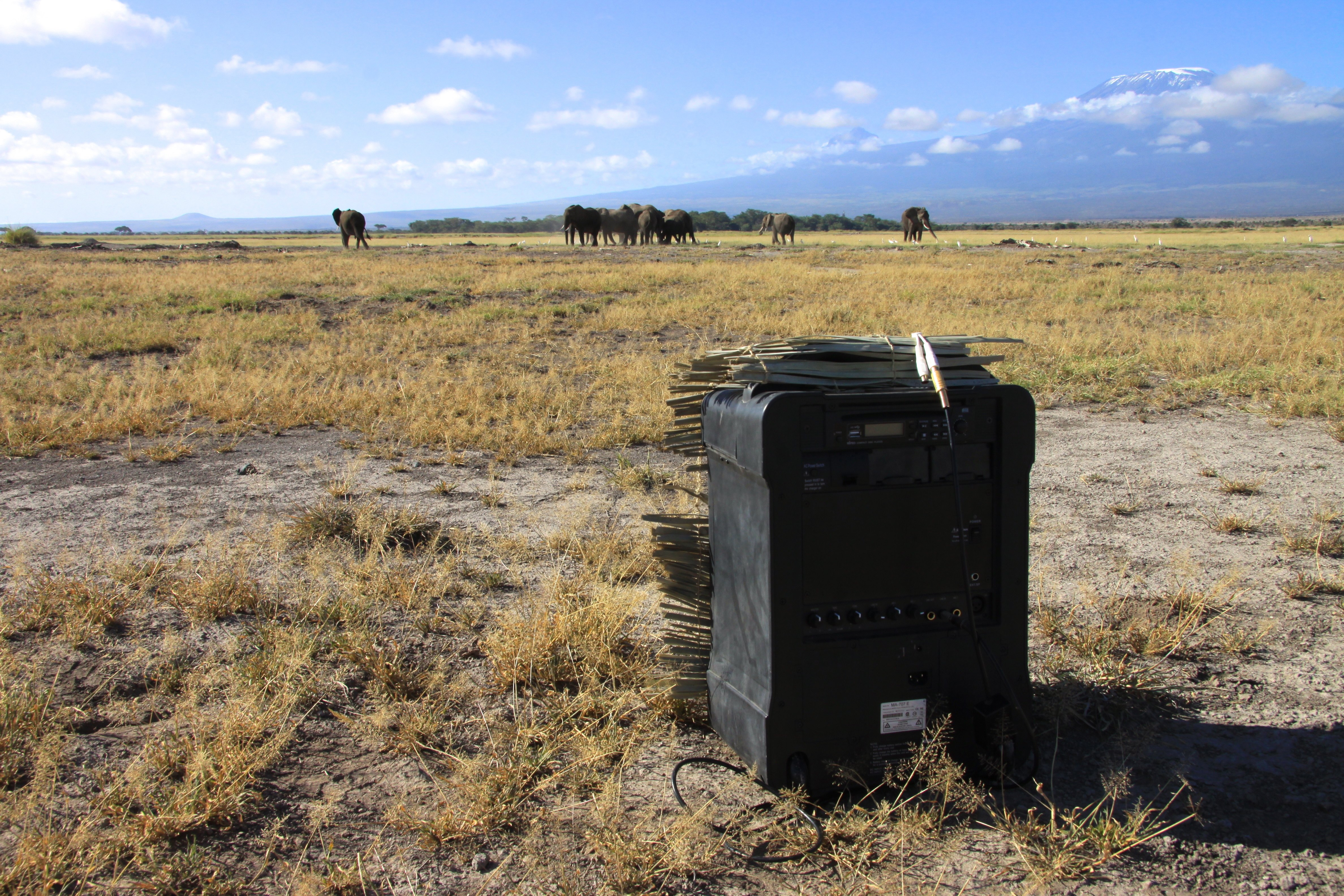 Loudspeaker in the field close to the elephant family, ready to play the voices. (Photo courtesy of Graeme Shannon)