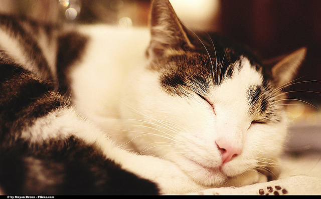 A relaxed, sleeping cat Photo by Moyan Brenn, CC, Flickr