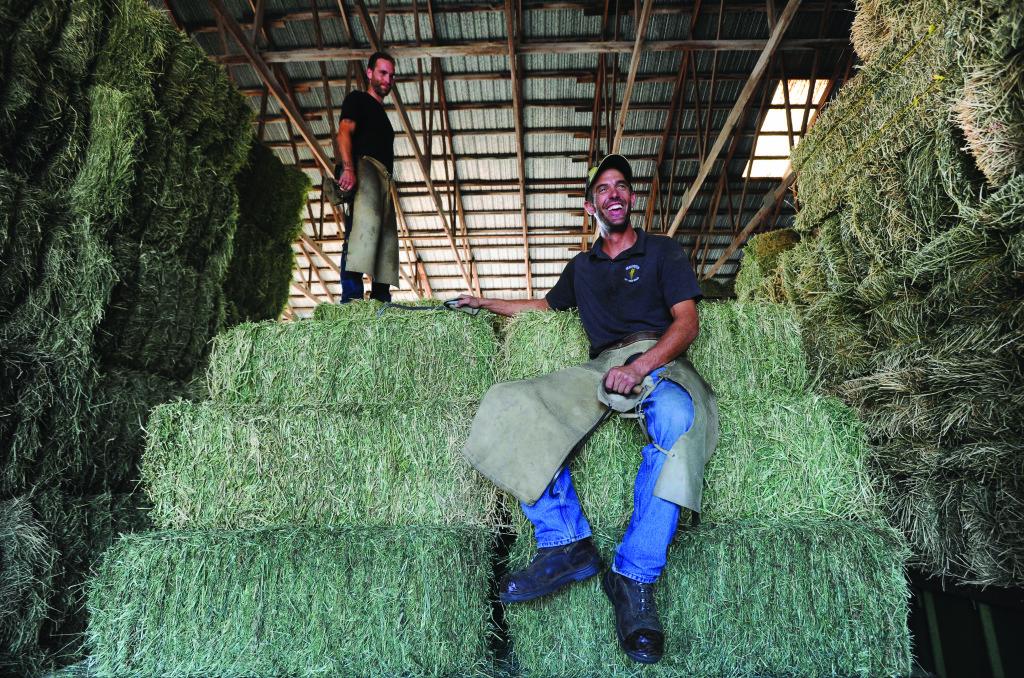 jason-vanderveen-hay-sales