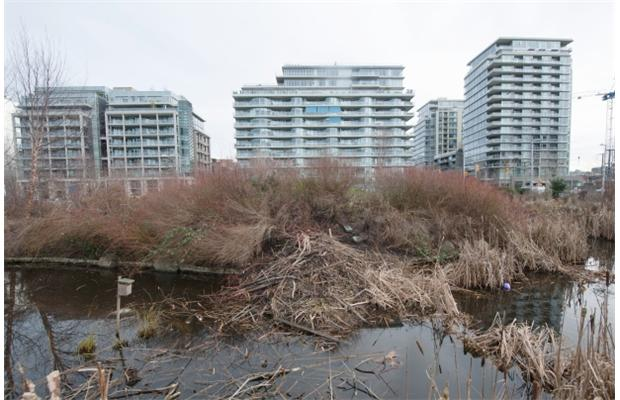 PHOTO: ARLEN REDEKOP / VANCOUVER SUN A new beaver pond was built at Hinge Park in Vancouver.