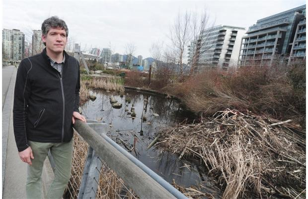 PHOTO: NICK PROCAYLO / VANCOUVER Vancouver Park Board biologist Nick Page at the new beaver pond at Hinge Park