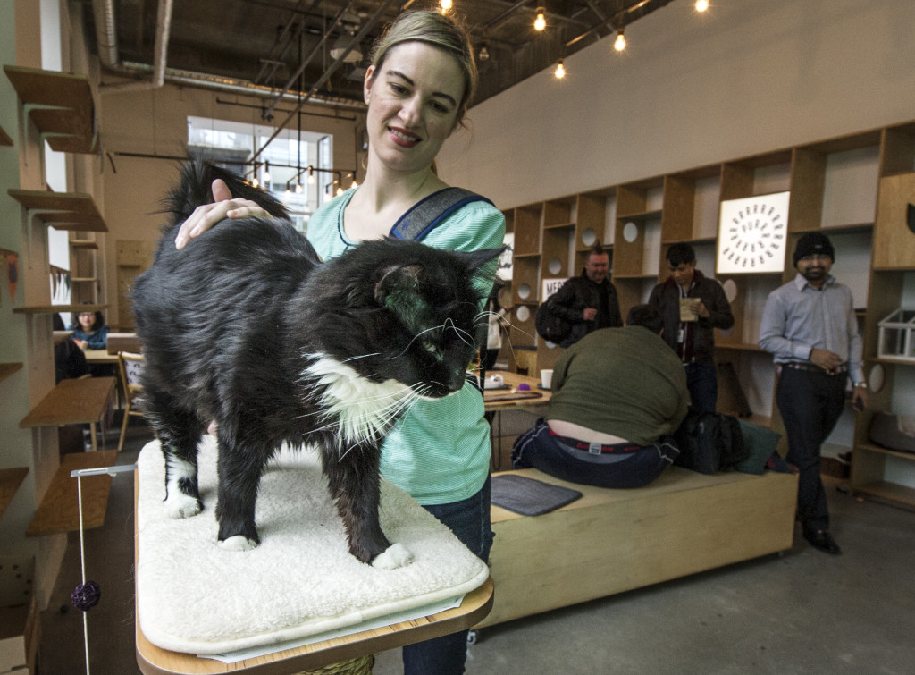 Cats live in this cafe. Michelle Furbisher pets a cat in her cafe. The cafe is a gathering spot for cat lovers. PHOTO: Steve Bosch / VANCOUVER SUN