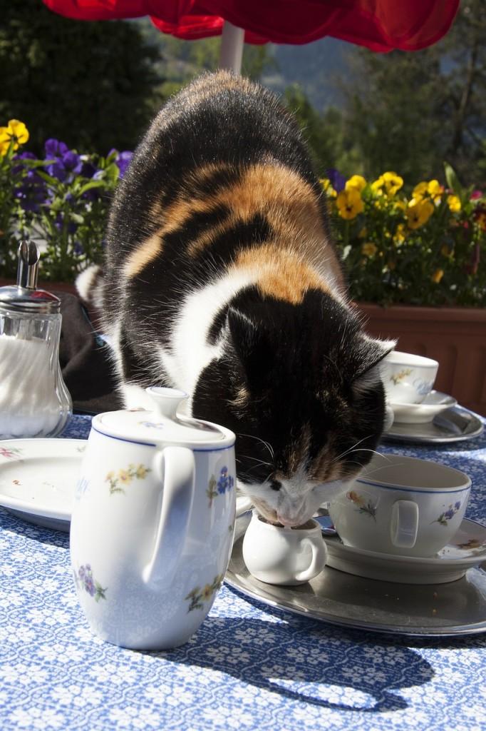 The cats like a good cup of tea, too. PHOTO - pixabay.com