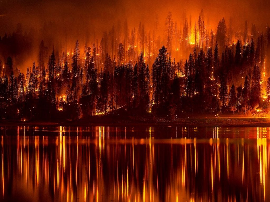 forest-fire-991479_1280
